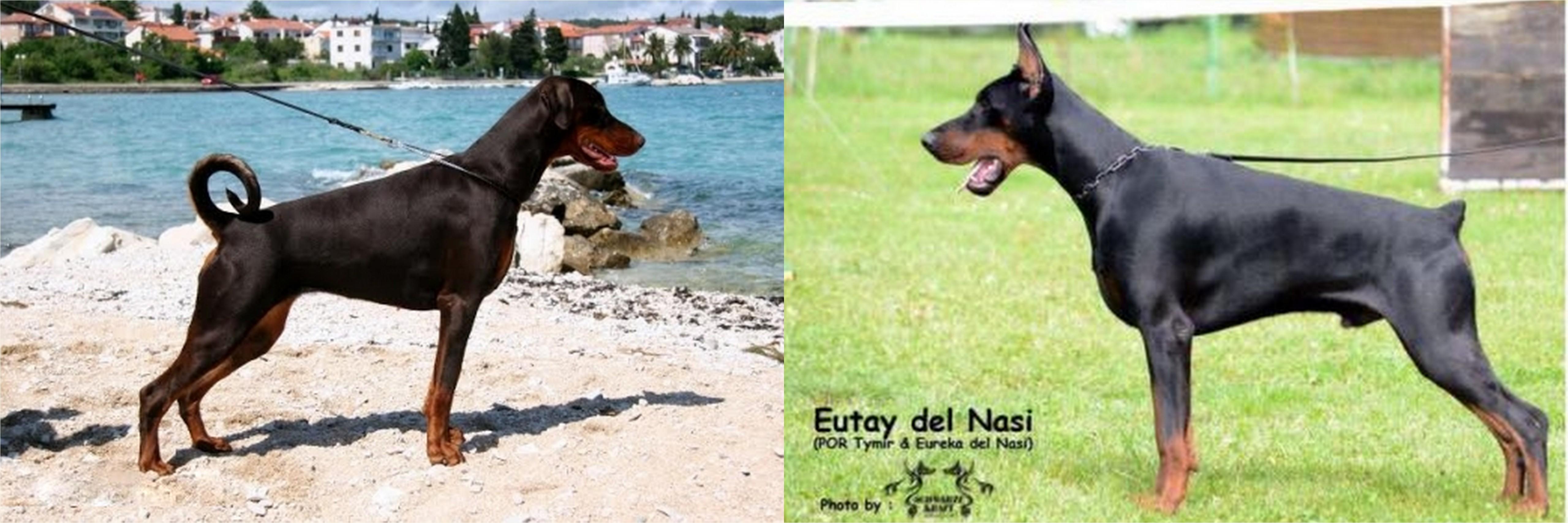 Fedra Best of Island x Eutay del Nasi